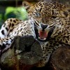 Minor boy mauled to death by leopard