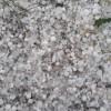 Rains, hailstorm lash northern Kashmir