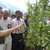 Vohra inaugurates first harvest of high density apples at SKUAST-K
