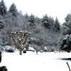 Srinagar-Jammu highway faces closure after fresh snowfall